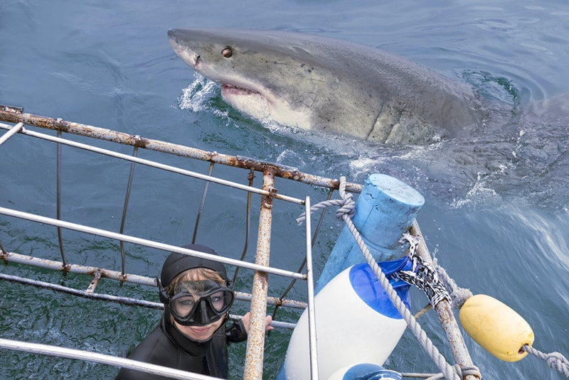 Sport Cape Town Helicopters | Tours | Shark Cage Diving