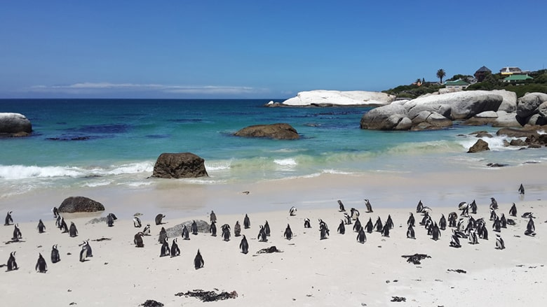 Sport Cape Town Helicopters | Cape Town | Boulders Beach