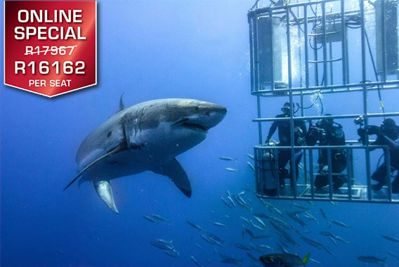 Sport Cape Town Helicopters | Exclusive flights and transfers | Shark Cage Diving